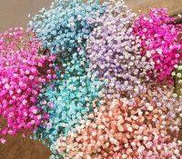 violeta-flowers_03.jpg
